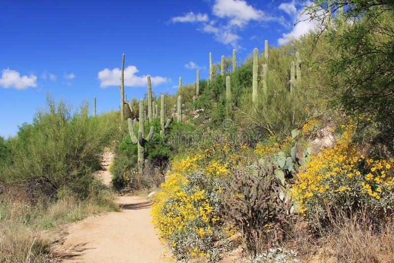 Pista de senderismo en barranco del oso en Tucson, AZ imágenes de archivo libres de regalías