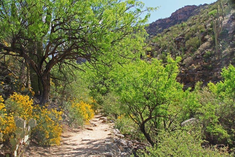 Pista de senderismo en barranco del oso en Tucson, AZ imagen de archivo libre de regalías
