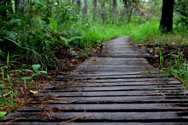 Pista de senderismo en bosque fotografía de archivo