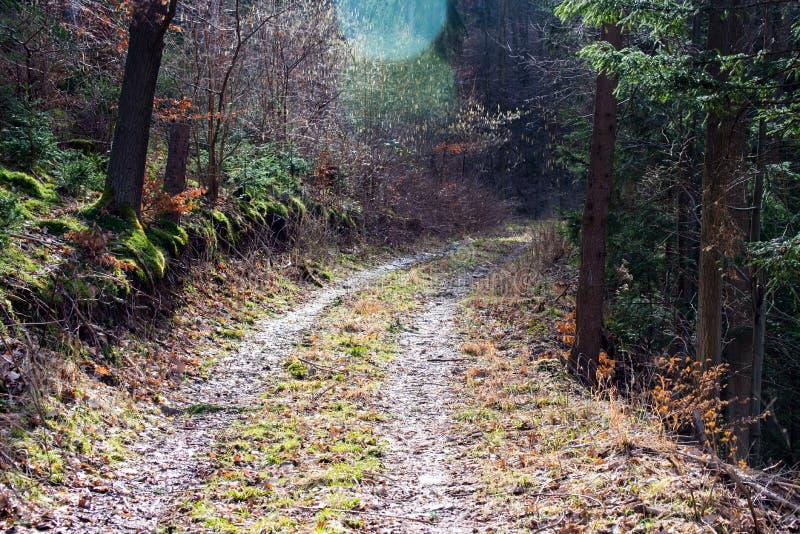 Pista de senderismo en el bosque III fotografía de archivo libre de regalías
