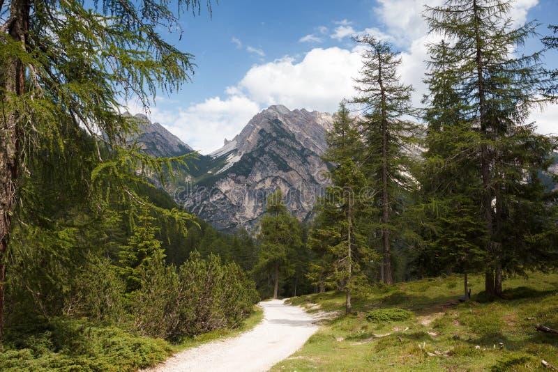Pista de senderismo en las montañas de Italia fotografía de archivo