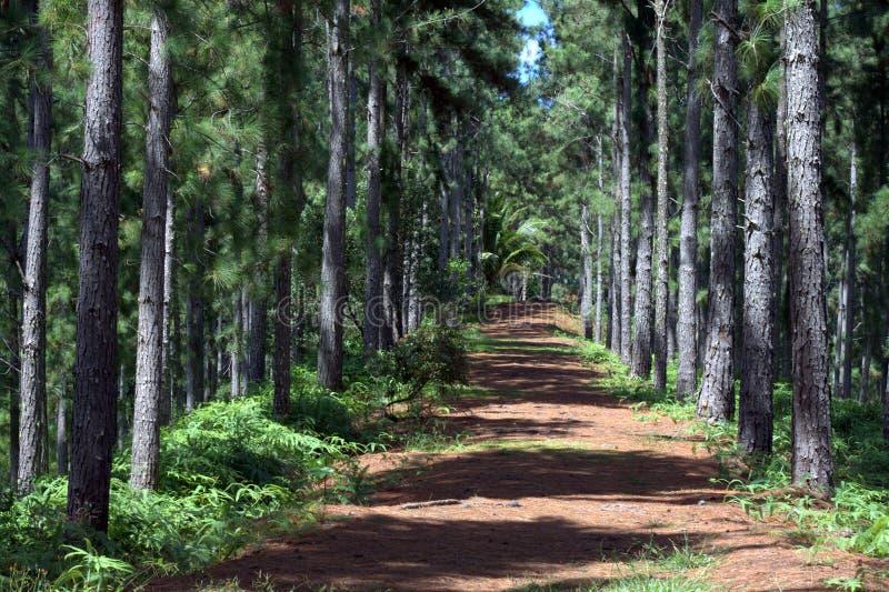 Pista de senderismo en las zonas tropicales imagen de archivo libre de regalías