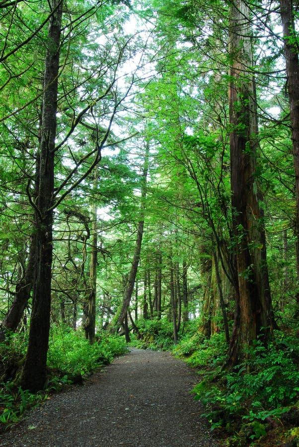 Pista de senderismo en selva tropical foto de archivo