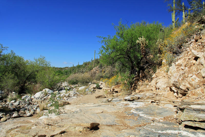 Pista de senderismo rugosa en barranco del oso en Tucson, AZ imágenes de archivo libres de regalías
