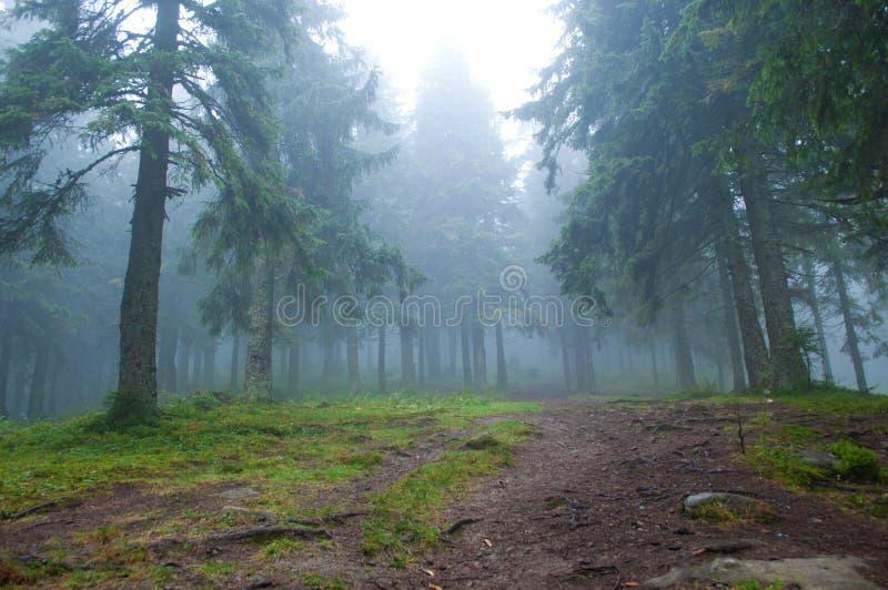 Pista de senderismo a través del bosque del pino imagenes de archivo