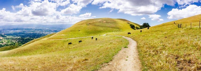 Pista de senderismo a través de las colinas de la área de la Bahía de San Francisco del sur; ganado que pasta en las laderas, San foto de archivo libre de regalías