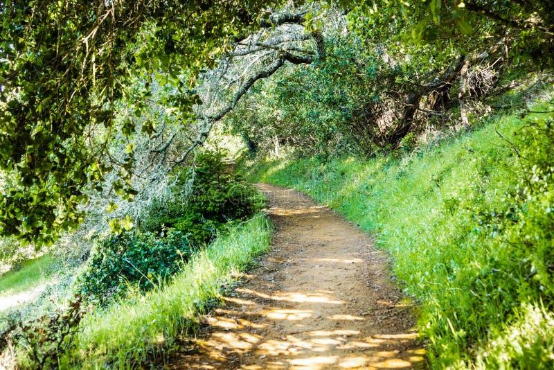 Pista de senderismo a través de los bosques del parque del condado de Edgewood, área de la Bahía de San Francisco, California fotografía de archivo libre de regalías