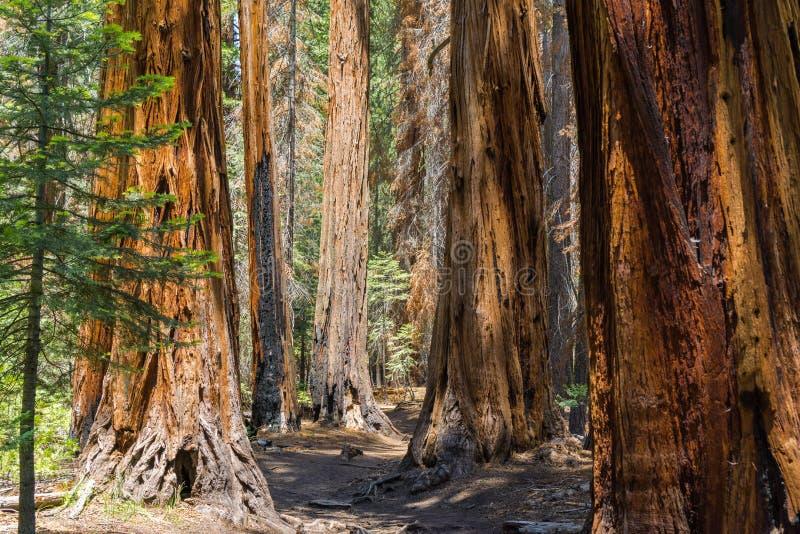 Pista de senderismo a través de los bosques del parque nacional de Yosemite, California fotos de archivo
