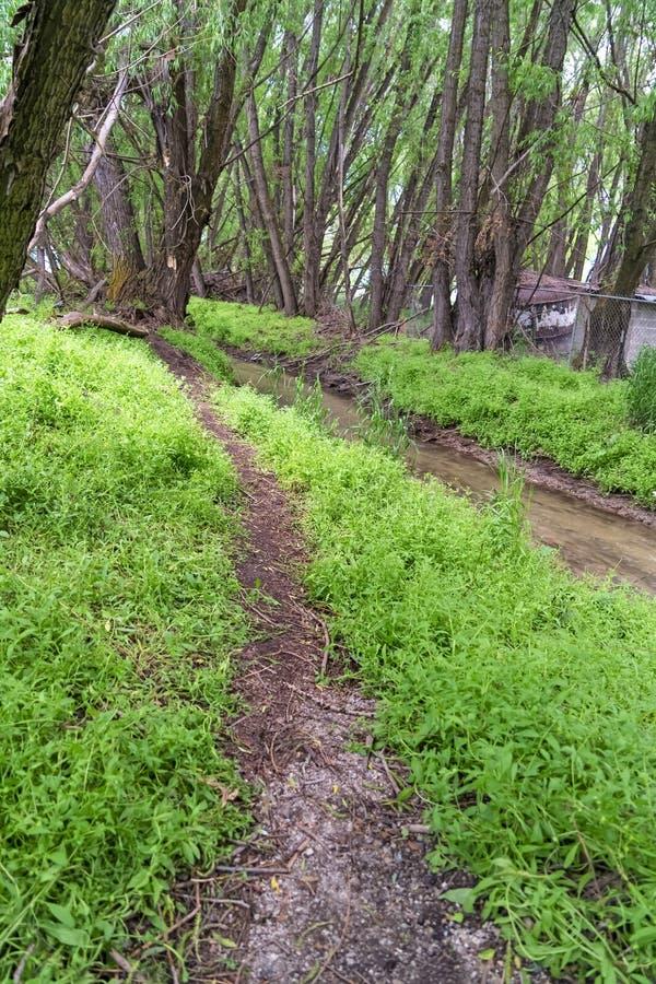 Pista de senderismo y corriente del narow rodeada por las hierbas y los árboles en el bosque imagen de archivo libre de regalías