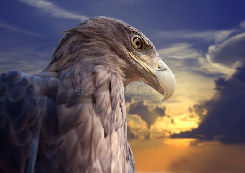 Pista del águila contra puesta del sol fotos de archivo libres de regalías