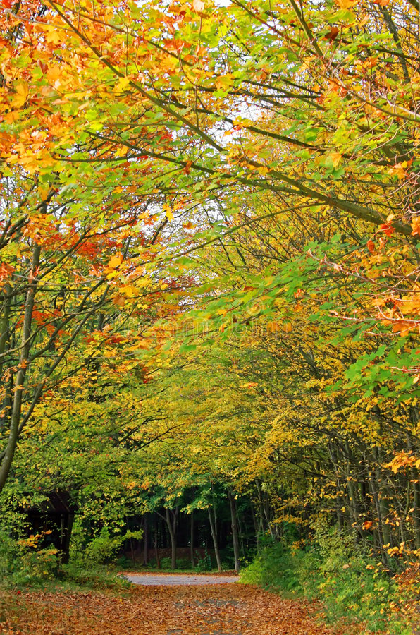 Pista del bosque del otoño imagen de archivo