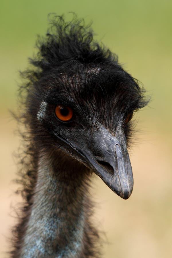 Pista del Emu, Australia fotografía de archivo