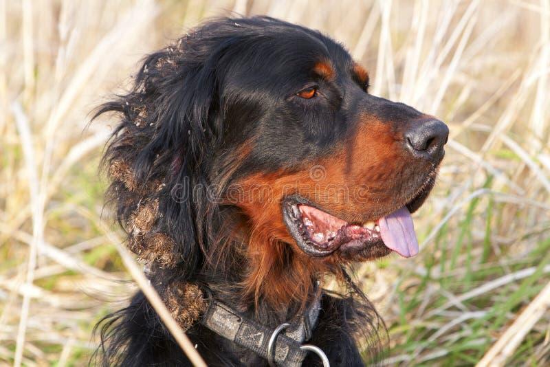 Pista del perro del organismo fotografía de archivo