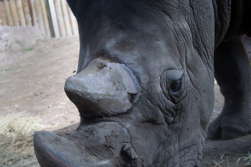 Pista del rinoceronte fotos de archivo