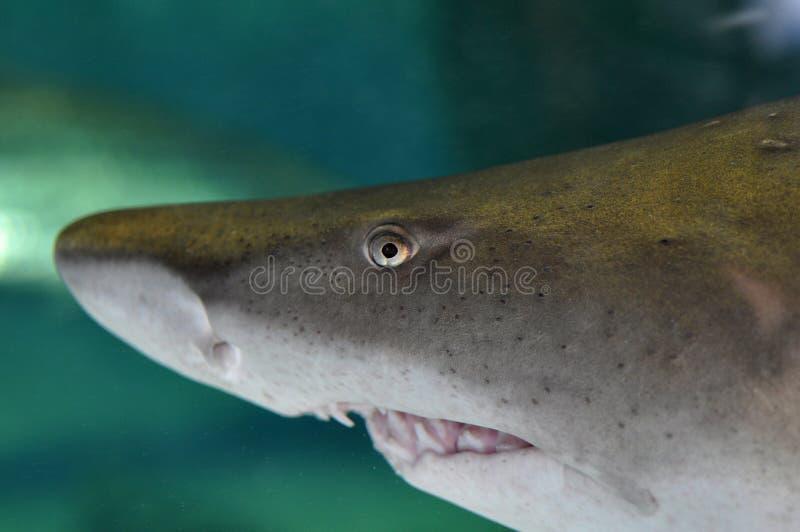 Pista del tiburón fotos de archivo