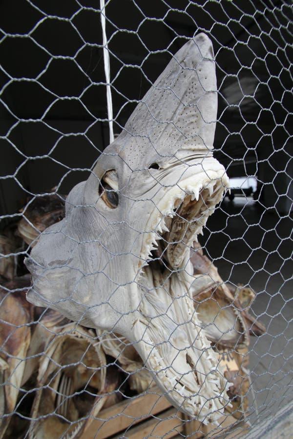 Pista del tiburón colgante imagenes de archivo