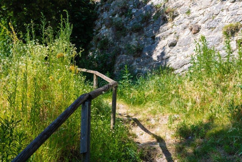 Pista della foresta che va su con l'inferriata di legno, percorso di trekking - immagine immagine stock libera da diritti