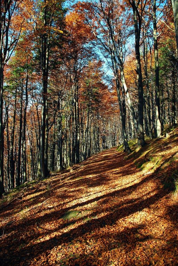 pista della foresta di autunno fotografie stock