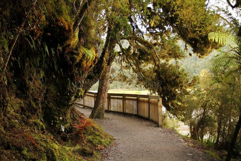 Pista di camminata del lago e della foresta pluviale in isola del sud, Nuova Zelanda immagine stock