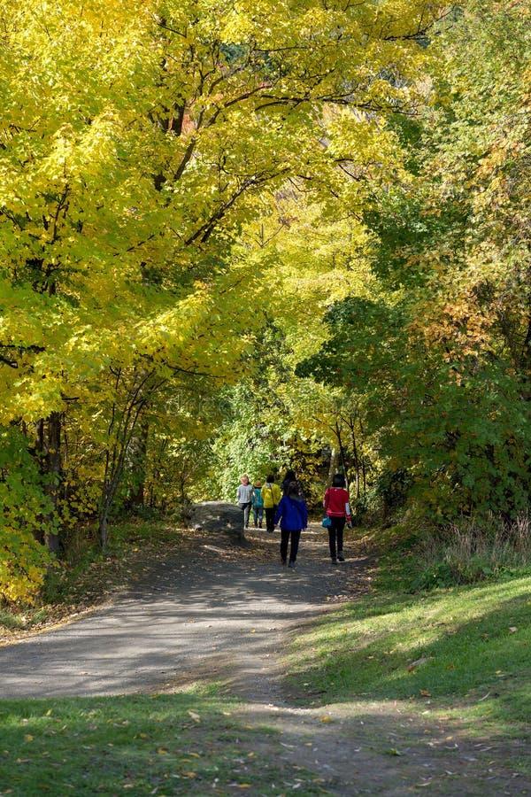 Pista di camminata in Forest Of Autumn Leaves Colourful immagini stock libere da diritti