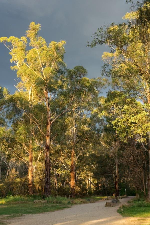 Pista di camminata lungo il fiume di Yarra in Warrandtye a Melbourne, Australia fotografia stock