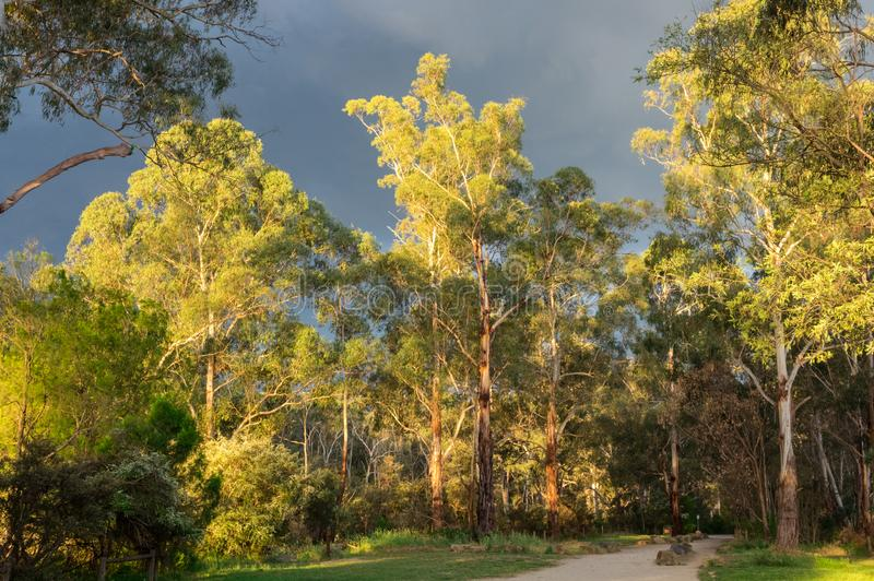 Pista di camminata lungo il fiume di Yarra in Warrandtye a Melbourne, Australia fotografie stock libere da diritti