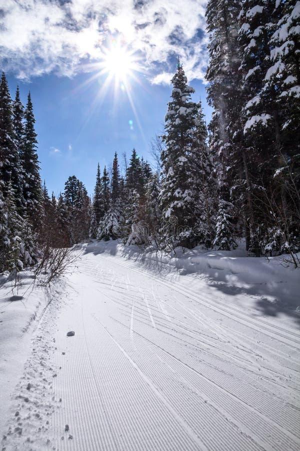 Pista di sci campestre, alberi, cielo blu e sole dello starburst immagine stock