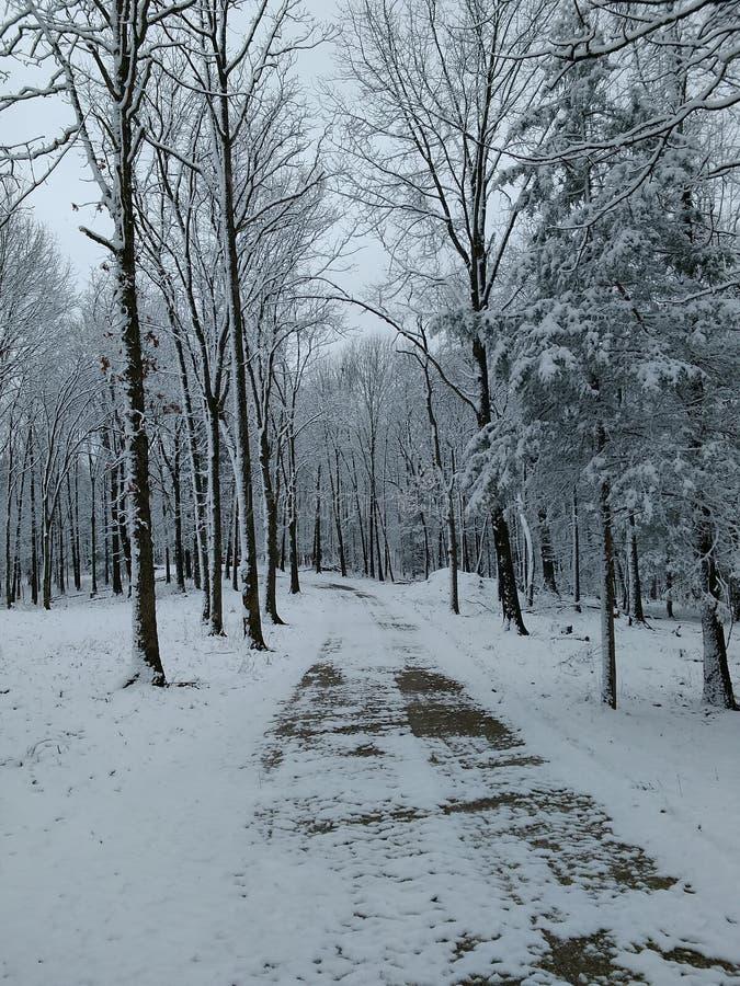Pista do inverno fotos de stock royalty free