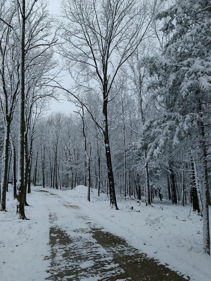Pista do inverno imagens de stock royalty free