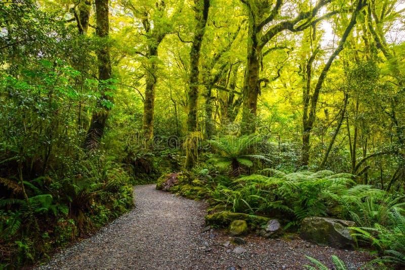 Pista en la caída del abismo, parque nacional de Fiordland, Milford Sound, Nueva Zelanda fotografía de archivo libre de regalías