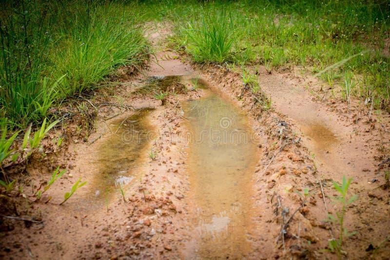 Pista fangosa della gomma sul modo dell'erba immagini stock