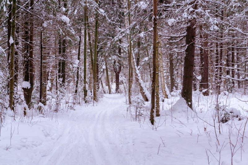 Pista nella foresta di inverno immagini stock libere da diritti