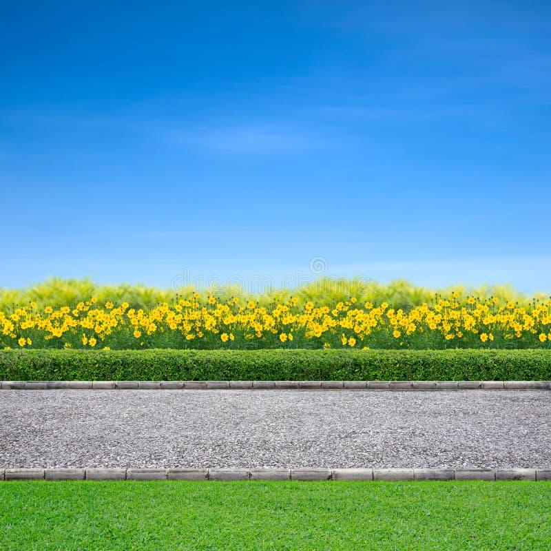 Pista que activa y flores amarillas imagen de archivo libre de regalías