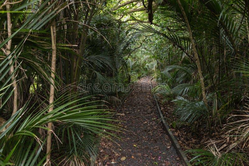 Pista que desaparece en selva tropical fotografía de archivo libre de regalías