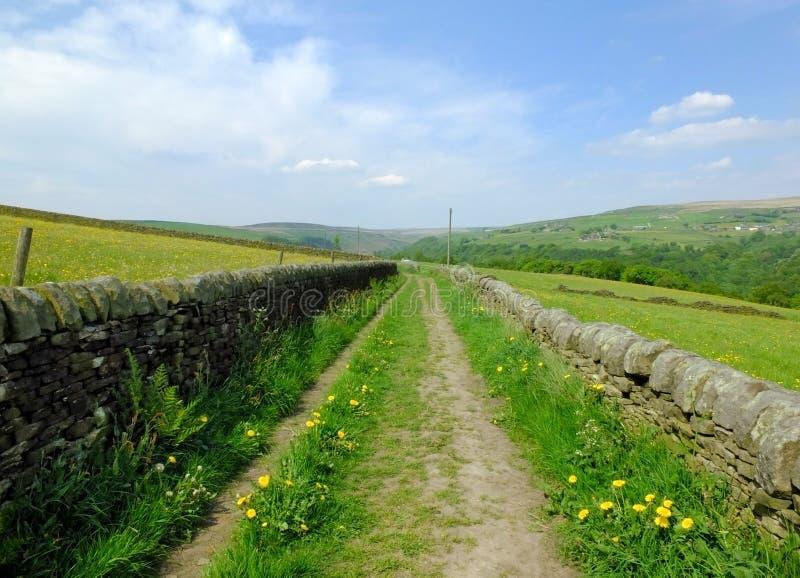 Pista reta longa do país com as paredes de pedra secas cercadas pelo pasto verde com os wildflowers na luz solar bonita do início foto de stock
