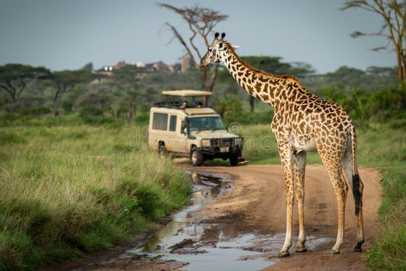 Download Pista Sommersa Didascalia Masai Della Giraffa Per La Jeep Fotografia Stock - Immagine di masai, africano: 117975318