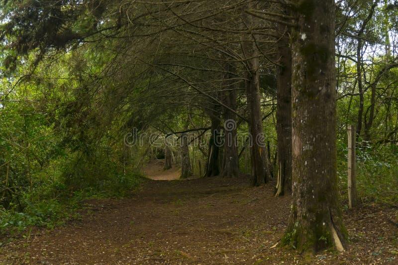 Pista a través del bosque foto de archivo libre de regalías