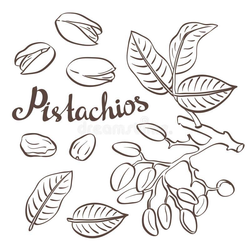 Pistaches avec les feuilles et le pistachier illustration libre de droits
