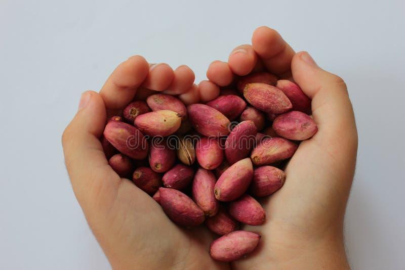 pistachio imagens de stock royalty free