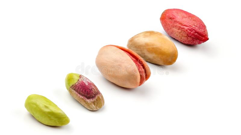 Pistachios in different stages from peeled green fruit, through roasted and salted to raw in purple skin, isolated on white royalty free stock photo