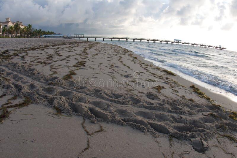 Pistas de la tortuga en la playa foto de archivo