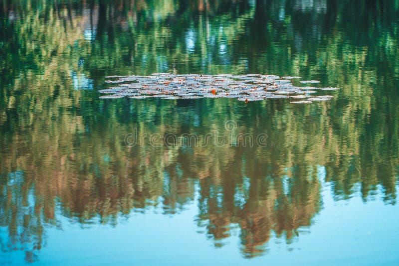 Pistas de lirio en la superficie de una charca Fondo abstracto, reflexión de árboles en agua Foco suave fotografía de archivo libre de regalías