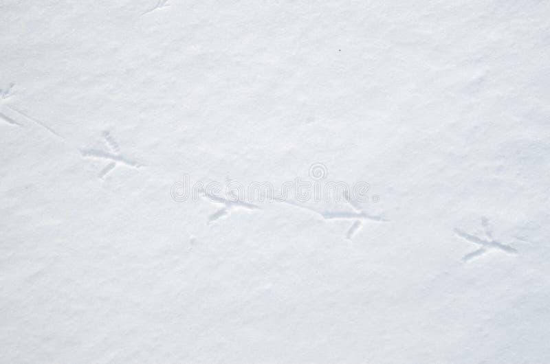 Pistas del pájaro en nieve en invierno foto de archivo