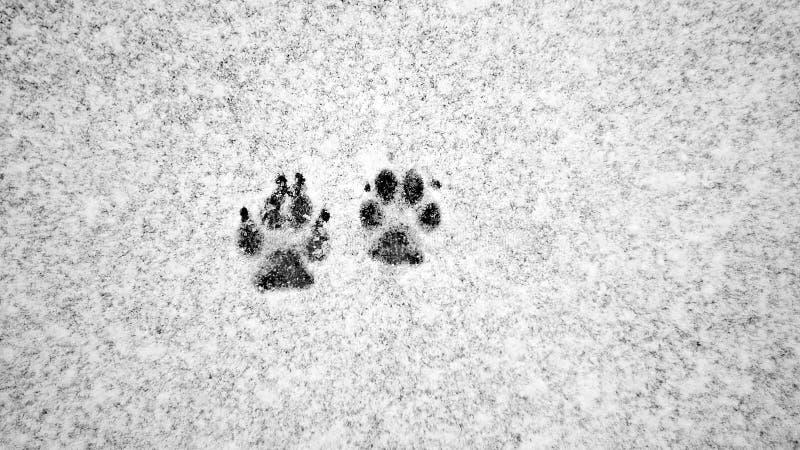 Pistas del perro en la nieve foto de archivo
