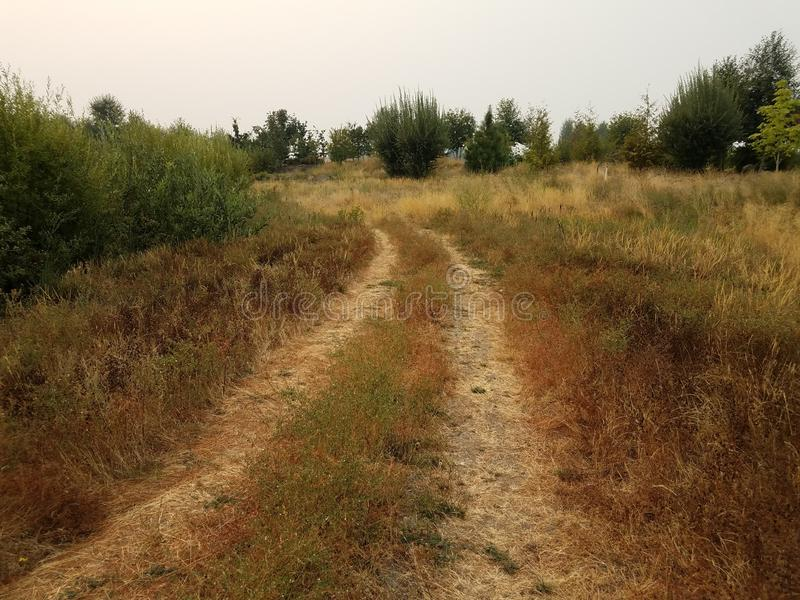 Pistas del rastro o del neumático en hierbas marrones y verdes con los árboles fotografía de archivo