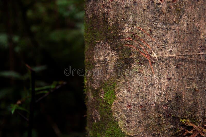 Pistas en árbol fotografía de archivo
