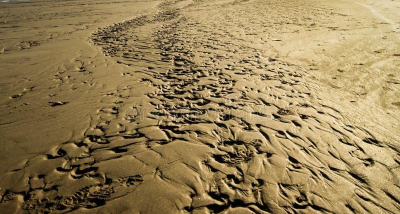 Pistas en la arena fotografía de archivo