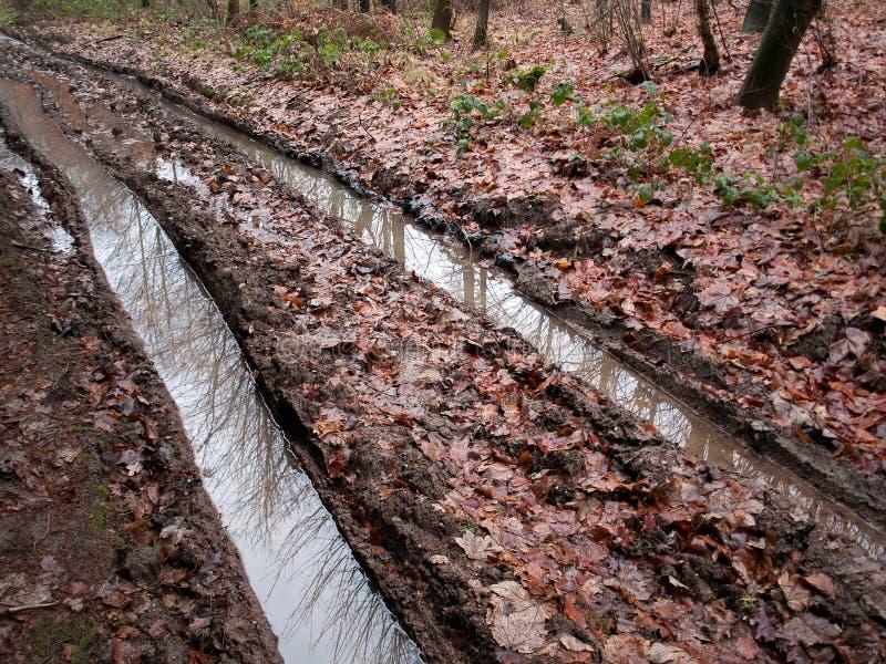 Pistas fangosas del neumático del whith del camino forestal del país fotografía de archivo libre de regalías