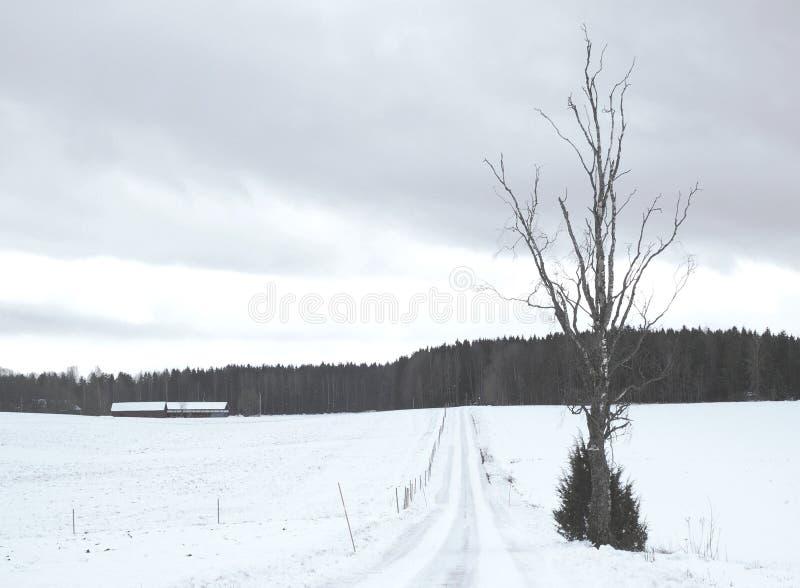Pistas nevosas simples del neumático - retrato foto de archivo libre de regalías
