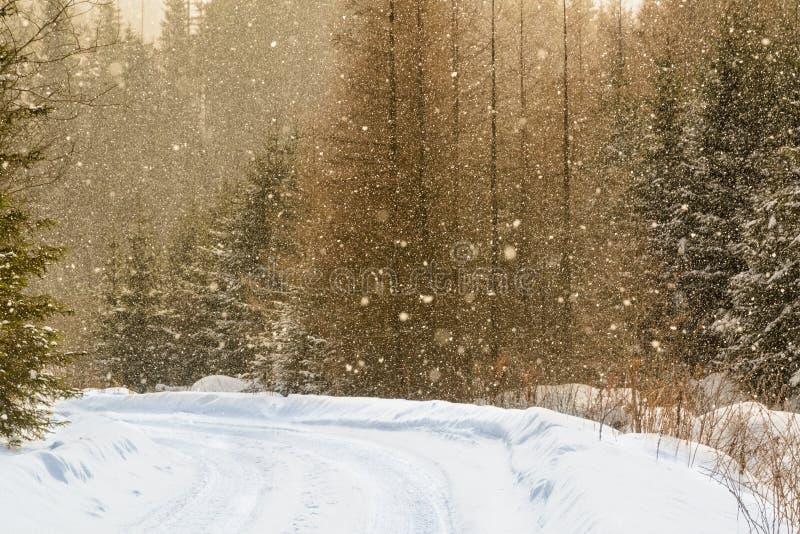 Pistas nevosas simples del neumático - retrato fotografía de archivo libre de regalías